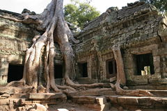 angkor收割废墟siem 免版税图库摄影