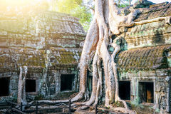 angkor柬埔寨寺庙wat 库存图片