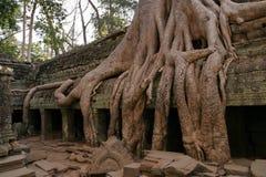 angkor柬埔寨收割废墟siem 库存照片