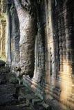 angkor柬埔寨高棉长满的废墟wat 免版税库存照片