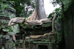 angkor柬埔寨prohm收割siem ta寺庙 库存图片