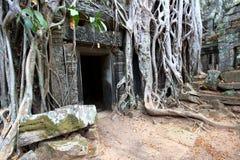 angkor柬埔寨prohm ta 免版税图库摄影