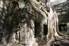 angkor根源破庙结构树 免版税库存照片