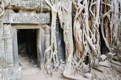 angkor近柬埔寨收割siem寺庙wat 免版税库存图片