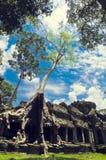 angkor à l'intérieur de wat de vue de temple de ta de som Photo stock