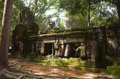 angkor Καμπότζη prohm TA Ναός ζουγκλών με τα ογκώδη δέντρα που αυξάνονται από τους τοίχους του Στοκ Εικόνα