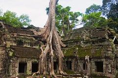 angkor Καμπότζη prohm TA Ναός ζουγκλών με τα ογκώδη δέντρα που αυξάνονται από τους τοίχους του Στοκ φωτογραφία με δικαίωμα ελεύθερης χρήσης