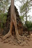 angkor Καμπότζη prohm TA Στοκ Φωτογραφίες