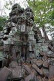 angkor Καμπότζη prohm TA Στοκ Εικόνες