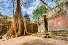 angkor Καμπότζη wat Khmer αρχαίος βουδιστικός ναός TA Prohm Στοκ Φωτογραφίες