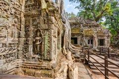 angkor Καμπότζη wat Khmer αρχαίος βουδιστικός ναός TA Prohm Στοκ φωτογραφία με δικαίωμα ελεύθερης χρήσης