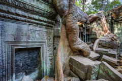angkor Καμπότζη wat Khmer αρχαίος βουδιστικός ναός TA Prohm Στοκ Φωτογραφία