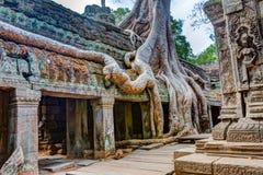 angkor Καμπότζη wat Khmer αρχαίος βουδιστικός ναός TA Prohm Στοκ εικόνες με δικαίωμα ελεύθερης χρήσης