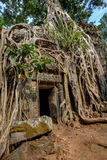 angkor Καμπότζη wat Khmer αρχαίος βουδιστικός ναός TA Prohm Στοκ εικόνα με δικαίωμα ελεύθερης χρήσης