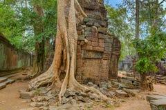 angkor Καμπότζη wat Khmer αρχαίος βουδιστικός ναός TA Prohm Στοκ Εικόνα