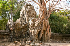 Angkor που εισβάλλεται από τη ζούγκλα Στοκ Εικόνα
