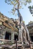 Angkor στο combodia Στοκ φωτογραφία με δικαίωμα ελεύθερης χρήσης