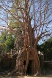angkor ужинает siem руин Стоковая Фотография RF