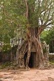 Angkor 1 Images stock