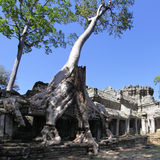 Angkor Stock Photography