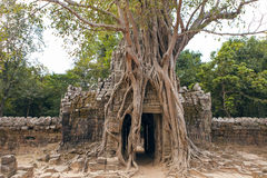 Angkor Royalty Free Stock Image