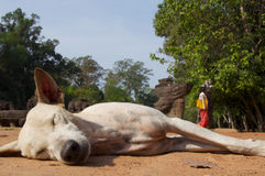 Angkor Fotografia Stock Libera da Diritti