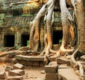 Angkor Stock Photo