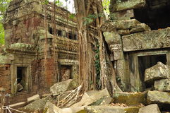 Angkor, Cambodia. Khmer Ta Prom temple ruins. The Unesco world heritage Khmer archaeological site of Angkor, Siem Reap, Cambodia. Ta Prom Buddhist temple ruins stock photography