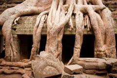 angkor Cambodia korzeniowy drzewny wat Obraz Stock