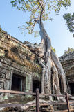 Angkor in combodia Fotografia Stock Libera da Diritti