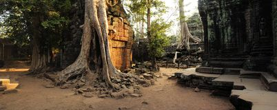Angkor era temple overgrown by giant roots of Royalty Free Stock Photo