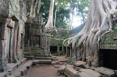 angkor Kambodża Obrazy Stock