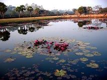 angkor lake lotosowa vat Zdjęcia Stock