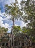 Angkor merci Prohm au Cambodge Images stock