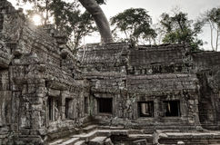 Angkor Prohm Khmer ancient Buddhist temple in jungle forest. Famous Royalty Free Stock Images