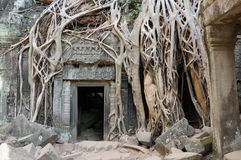 angkor prohm ta寺庙wat 免版税库存照片