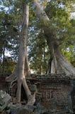 angkor prohm ta寺庙wat 免版税库存图片