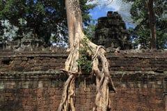 angkor prohm TA Στοκ Φωτογραφίες