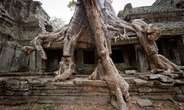 Angkor Roots Stock Photos