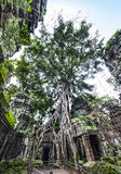 Angkor (TA Prohm ή ναός επιδρομέων τάφων), Καμπότζη. Περιοχή παγκόσμιων κληρονομιών της ΟΥΝΕΣΚΟ. Στοκ Εικόνες