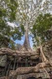 Angkor TA Prohm στην Καμπότζη Στοκ Εικόνα