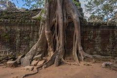 Angkor TA Prohm στην Καμπότζη Στοκ Φωτογραφίες