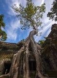 Angkor TA Prohm στην Καμπότζη Στοκ Εικόνες