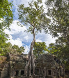 Angkor TA Prohm στην Καμπότζη Στοκ Φωτογραφία