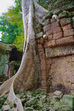 Angkor TA Prohm στη ζούγκλα Στοκ φωτογραφία με δικαίωμα ελεύθερης χρήσης
