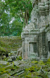 Angkor TA Prohm στη ζούγκλα Στοκ Εικόνες