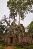 Angkor TA Prohm στη ζούγκλα Στοκ φωτογραφίες με δικαίωμα ελεύθερης χρήσης