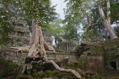 Angkor TA Prohm στη ζούγκλα Στοκ Φωτογραφίες