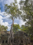 Angkor Ta Prohm in Cambodia Stock Images