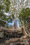 Angkor Ta Prohm in Cambodia Stock Image